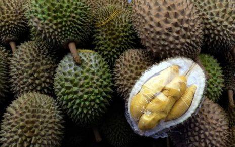 Manfaat Durian yang Tak Banyak Diketahui dari Kulit hingga Akarnya