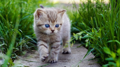 Oscar Kucing Lucu Ini Tahu Kapan Seseorang Akan Meninggal