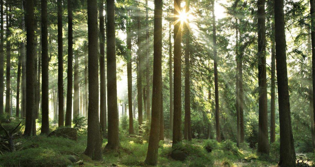 4 Hal Mengejutkan yang Pernah Ditemukan dalam Hutan