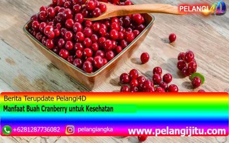 Manfaat Buah Cranberry untuk Kesehatan