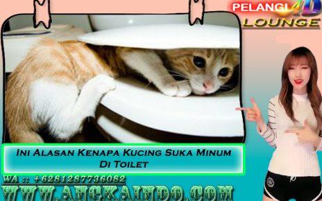 Ini Alasan Kenapa Kucing Suka Minum Di Toilet