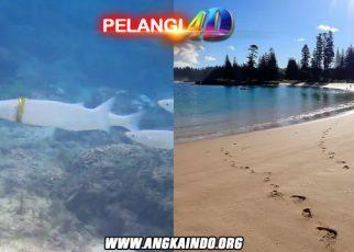 Pasangan Ini Kehilangan Cincin Kawin Di Laut, Dibawa Kembali Oleh Seekor Ikan